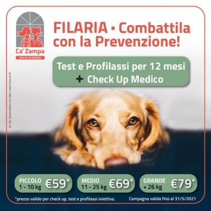Filaria | CremonaPo